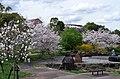 福神中央公園 2014.4.03 - panoramio.jpg