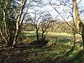 -2021-03-15 A view across to Bransmeadow Carr from Crostwight Heath.JPG