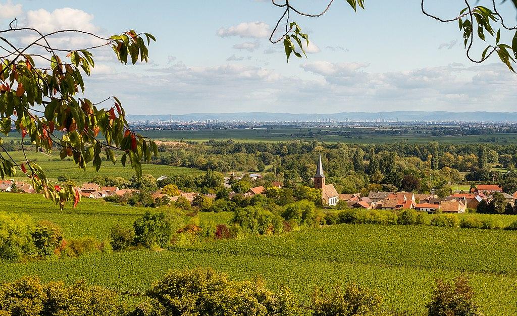 Blick ostwärts auf Forst an der Weinstraße und auf die Rheinebene (Immaterielles Kulturerbe in Rheinland-Pfalz: Forster Hanselfingerhut-Spiel)