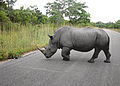 01 Rhino marking its territory SA 02 (Flipbook).jpg