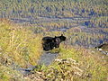 1106 - rodinka medvedov na vecery.jpg