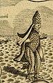 1685, Carlo Labia, Impresse Pastorali, p12 zoom.jpg