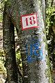 18 @ Exploitation forestière @ Forêt @ Sous le Mont Baret (51139935767).jpg