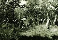 1916 Fortepan 85349.jpg