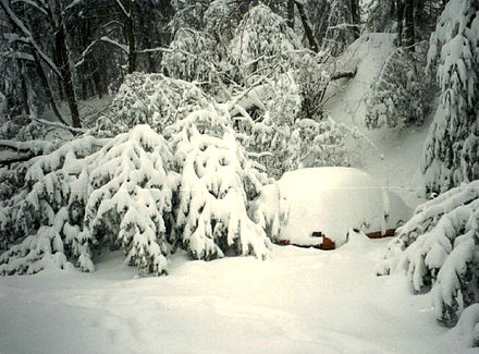 Under the weight of snow, a tree falls next to a car in Asheville, North Carolina 1993 Storm of the Century Asheville, North Carolina snowfall.jpg