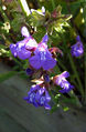 2006-10-30-Salvia01.jpg