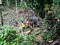2010년 8월 태국 제16기 소방간부후보생 윤석민, 김영진, 최광모 하계휴가 사진 211 Kwangmo's iPhone.jpg