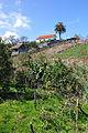 2010-03-03 14 25 09 Portugal-São Jorge.jpg