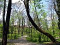 2011, Parcul Carol, primavara (5).jpg