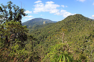Turquino National Park - The Sierra Maestra mountains with Cuban pine forests in the park.