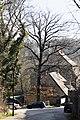 2012-03-17 ND 0157 Stieleiche, Schlosshof, Goseck, SA.jpg