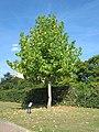 20120817Amberbaum Hockenheim1.jpg