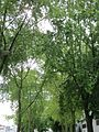 20120828Bismarckstr Saarbruecken1.jpg