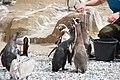2015-05-24 Vogelpark Marlow 18.jpg