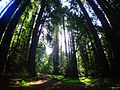2016 Muir Woods National Monument P3301071.jpg