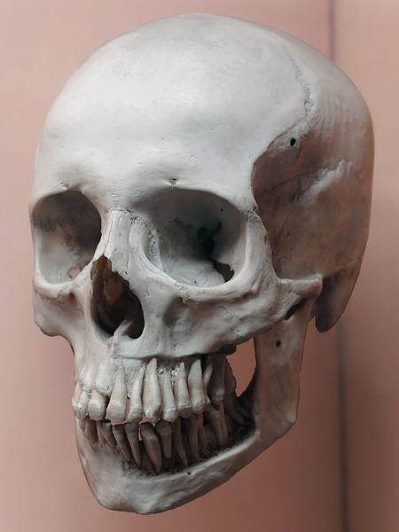 File:2017-04-29-IMG 6888-Skull2 (retouched).jpg