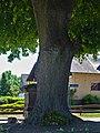 2020-06-01 ND 28 Linde in Warburg-Ossendorf (NRW) 02.jpg