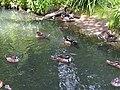 2 Mixt flock W41.jpg