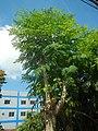 3428Poblacion, Baliuag, Bulacan 40.jpg
