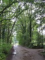 49849 Wilsum, Germany - panoramio - Roland Meijerink (17).jpg