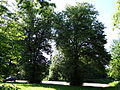 617683 A 683 Krakow Krzesławice Wankowicza 25 park w zespole dworsko parkowym 51.JPG