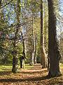 "668. Mikhailovskoye village. (Pskov oblast). Alley of Anna Kern manor park ""Mikhailovskoye""..JPG"
