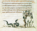 78-Fisiologo di Berna - Salamandra.jpg