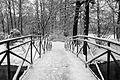 9042vik Park w Pszczynie . Foto Barbara Maliszewska.jpg
