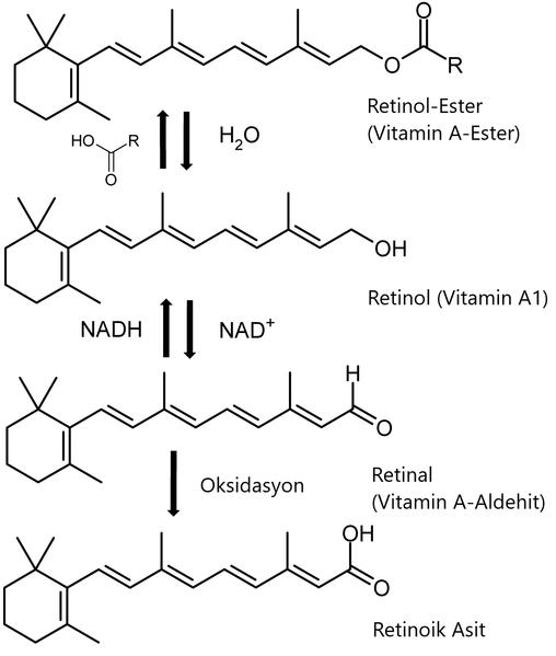 File:A-Vitaminleri-Sentezi.png