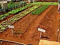 AJM 038 Havana garden.JPG