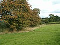A fruitful hedge - geograph.org.uk - 231467.jpg