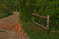 A lane in Lithuania, 11 Sept. 2008 - Flickr - PhillipC.jpg