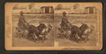 A stylish Virginia turnout, (showing African American boy in goat cart), by Jarvis, J. F. (John F.), b. 1850.png