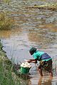 A woman washes cassava in rural DRC (7609952020).jpg