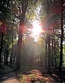 A wonderful start of this sunny 24 May 2012 with magnificent sunbeams trough the trees - panoramio.jpg