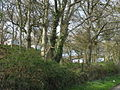 A woodland caravan park at Tre-gof - geograph.org.uk - 780132.jpg