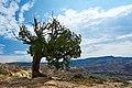 Abiquiu, New Mexico (44552711761).jpg