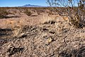 About two miles north-northeast of Cuchillo - Flickr - aspidoscelis (2).jpg