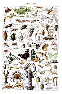 Insecte - Vikidia, l'encyclopédie des 8-13 ans