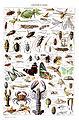 Adolphe Millot arthropodes-pour tous fixed.jpg