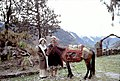 Alice Kandell with villager and horse, Sikkim 30122v.jpg