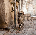 Alley Cat, Jerusalem.jpg