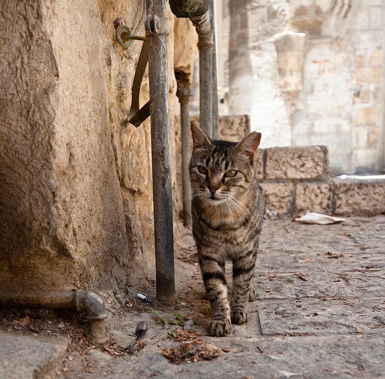 Alley Cat  Bar Intro Kimbo