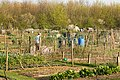 Allotments near Needingworth - geograph.org.uk - 392706.jpg
