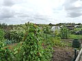Allotments on the Cambridge Road - geograph.org.uk - 1452344.jpg