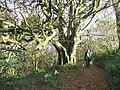 Allt Pontfaen woods - geograph.org.uk - 277886.jpg