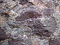 Alluvial polymict conglomerate (Mount Rogers Formation, Neoproterozoic, 750-760 Ma; Fox Creek roadcut, west of Troutdale, Virginia, USA) 23 (30463328096).jpg