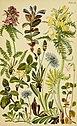 Alpenflora; die verbreitetsten Alpenpflanzen von Bayern, Österreich und der Schweiz (1922) (18110477861).jpg
