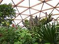 Amazonica vlindertuin Diergaarde Blijdorp Rotterdam.jpg