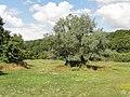 Ambleville (95), paysage près de la RD 135 entre Le Vaumion et le bourg 3.JPG
